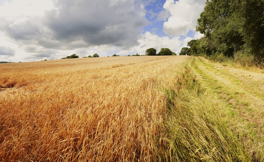 Images with Impact: The Great British Bioscience Imagery Competition now open for entries, Wheat field source Thinkstock